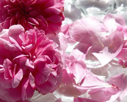 Acqua di Rose - Effetti benefici e proprietà cosmetiche